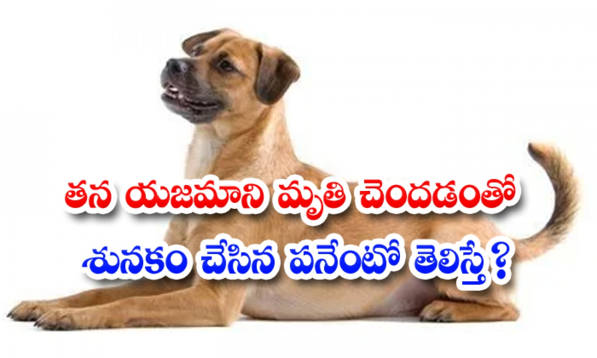What If Panento Knew Who Made The Dog After His Owner Died-తన యజమాని మృతి చెందడంతో శునకం చేసిన పనేంటో తెలిస్తే-General-Telugu-Telugu Tollywood Photo Image-TeluguStop.com