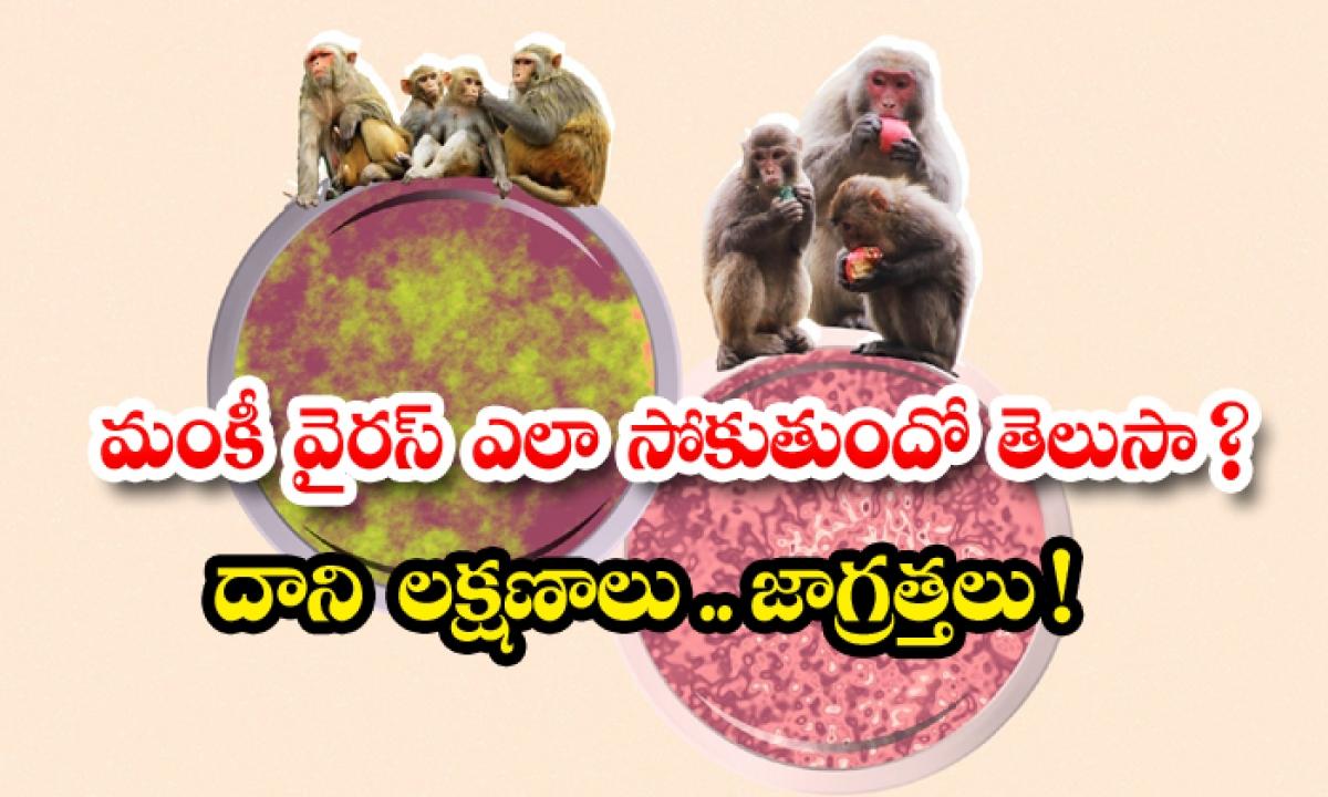 What Is Monkey Virus Symptoms And Prevention Method-మంకీ వైరస్ ఎలా సోకుతుందో తెలుసా దాని లక్షణాలు.. జాగ్రత్తలు-General-Telugu-Telugu Tollywood Photo Image-TeluguStop.com