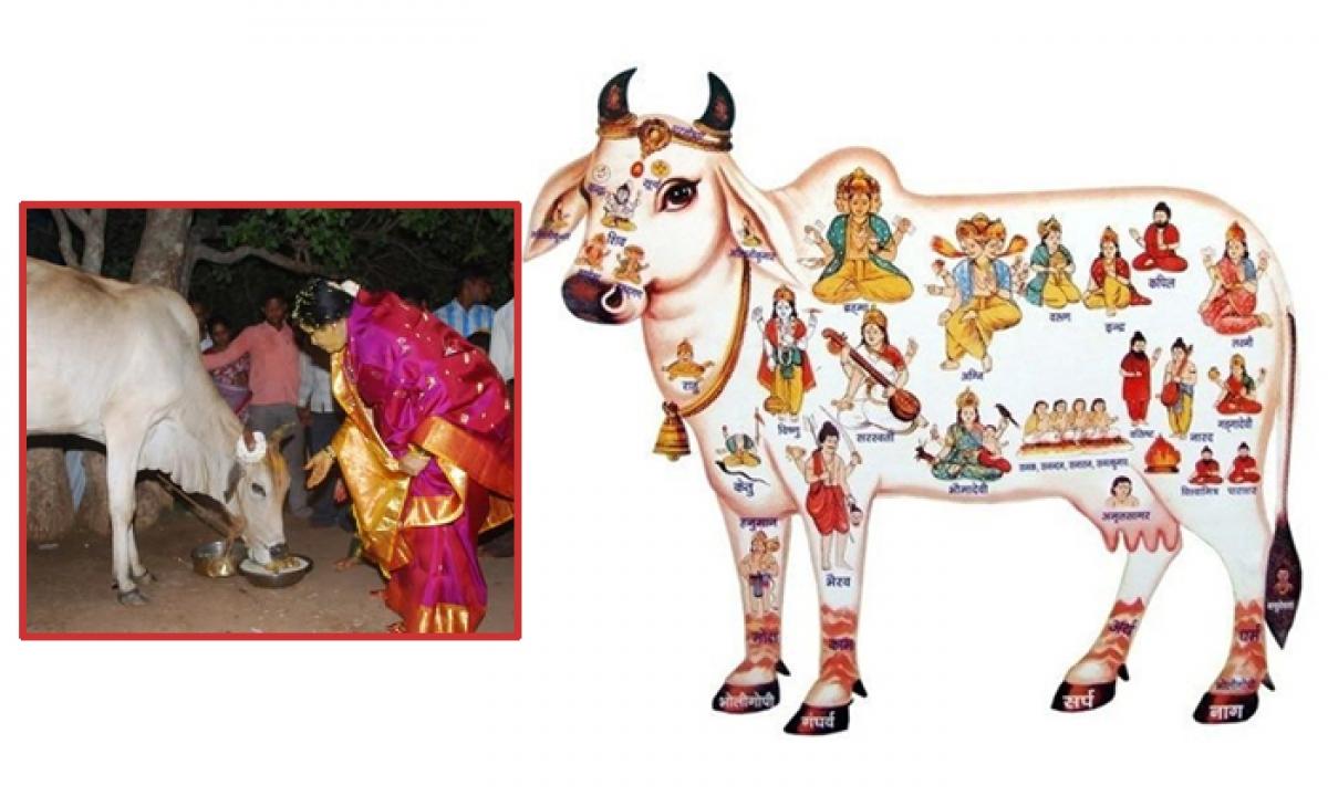 Which Type Of Food Must Be Fed To Cows Kamadhenu-TeluguStop.com