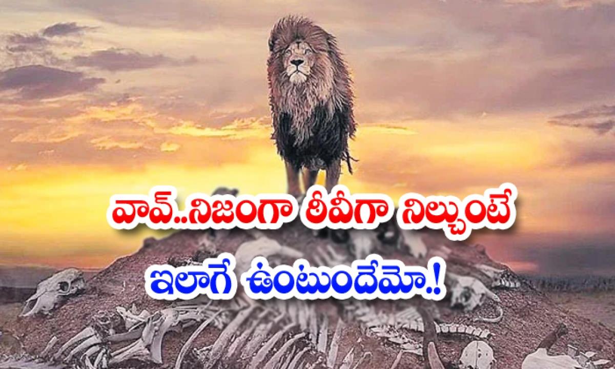 Wow Would It Really Be Like If The Lion Stood Stiff-వావ్.. నిజంగా సింహం ఠీవీగా నిల్చుంటే ఇలాగే ఉంటుందేమో..-General-Telugu-Telugu Tollywood Photo Image-TeluguStop.com