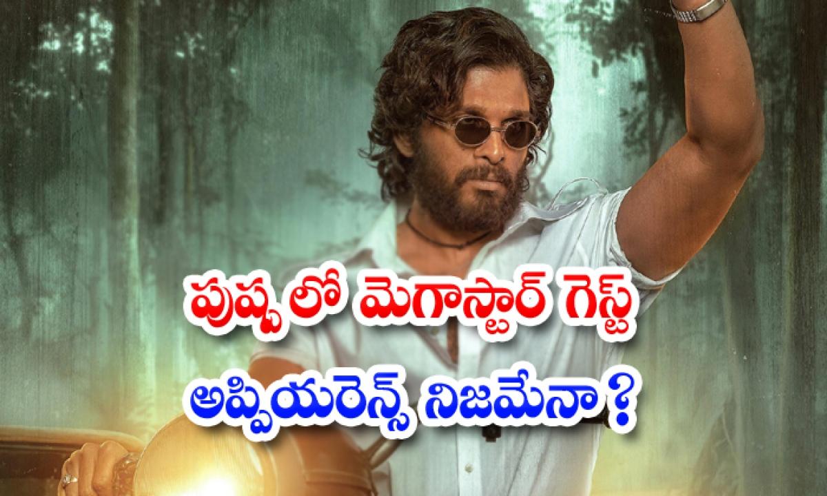 Chiranjeevi In Allu Arjun And Sukumar Movie Pushpa-TeluguStop.com