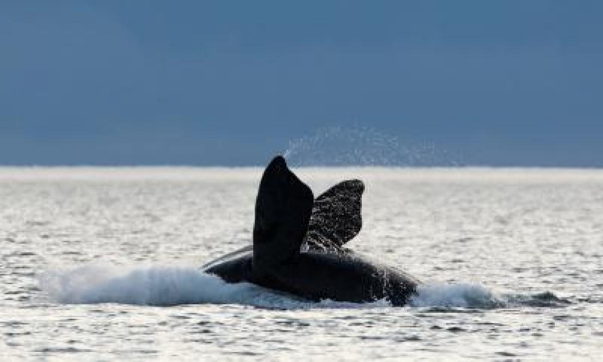 Amid Slowdown, Scientists Assess Changes In Marine Life Behaviour-TeluguStop.com