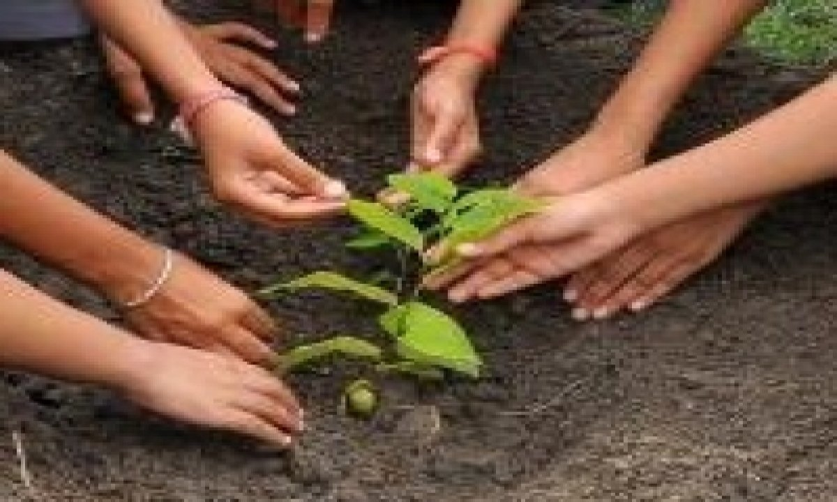 Andhra Planted 33 Crore Saplings In Two Years: Minister-TeluguStop.com