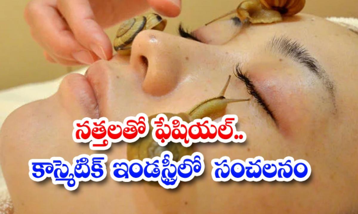 Here How Snail Slime Can Cure Age Old Problems-నత్తలతో ఫేషియల్… కాస్మెటిక్ ఇండస్ట్రీలో సంచలనం-General-Telugu-Telugu Tollywood Photo Image-TeluguStop.com