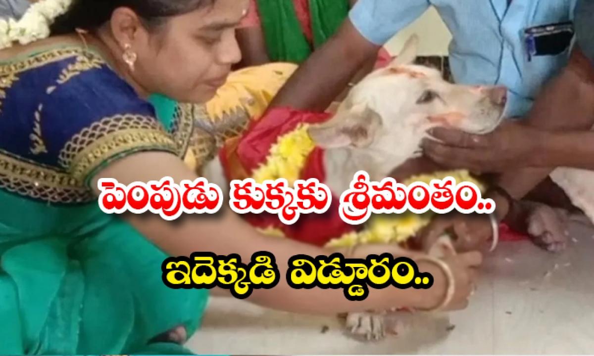 Baby Shower For A Pet Dog This Is Very Strange-పెంపుడు కుక్కకు శ్రీమంతం.. ఇదెక్కడి విడ్డూరం..-General-Telugu-Telugu Tollywood Photo Image-TeluguStop.com