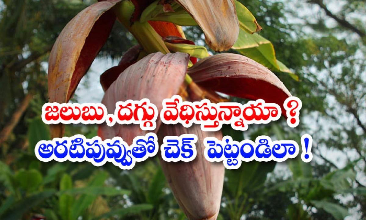 Banana Flower Helps To Get Rid Of Cold And Cough-జలుబు, దగ్గు వేధిస్తున్నాయా అరటిపువ్వుతో చెక్ పెట్టండిలా-Latest News - Telugu-Telugu Tollywood Photo Image-TeluguStop.com