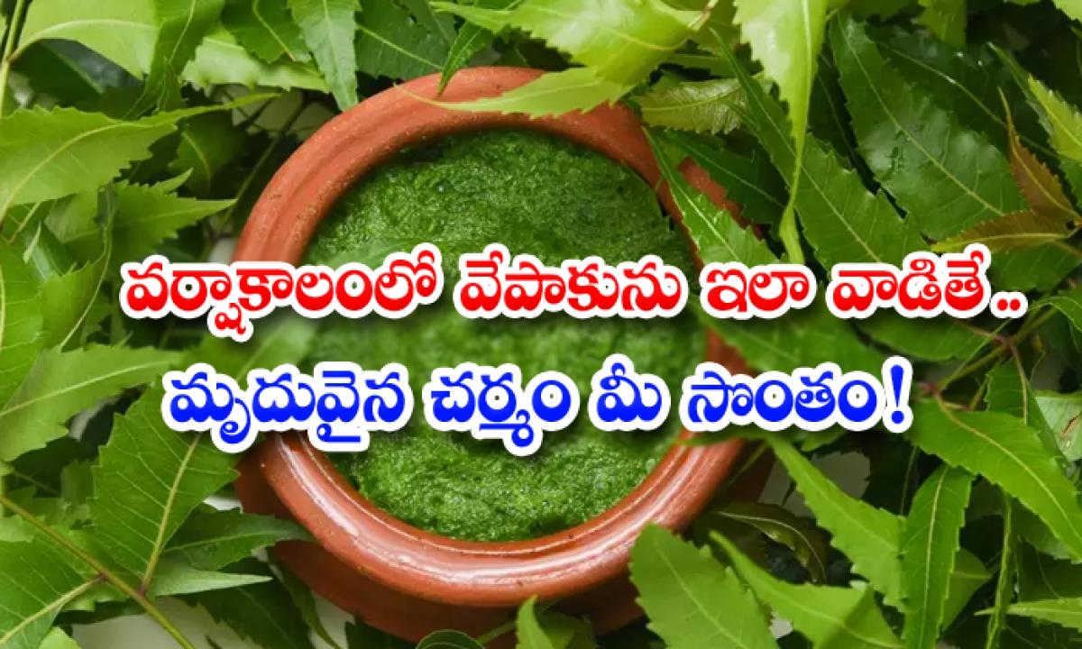 Beauty Benefits Of Neem Leaves In Rainy Season-వర్షాకాలంలో వేపాకును ఇలా వాడితే..మృదువైన చర్మం మీసొంతం-Latest News - Telugu-Telugu Tollywood Photo Image-TeluguStop.com