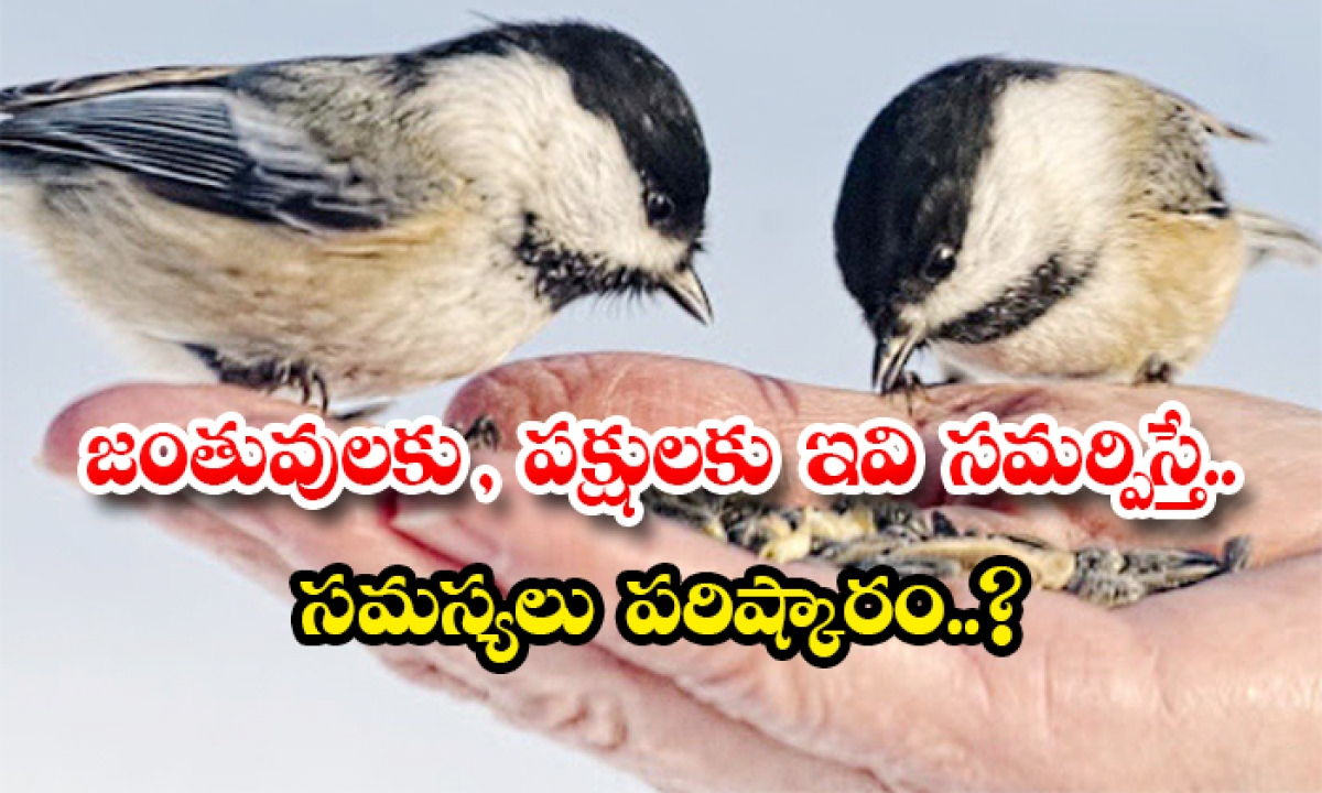 If These Are Offered To Animals And Birds Problems Are Solved-TeluguStop.com