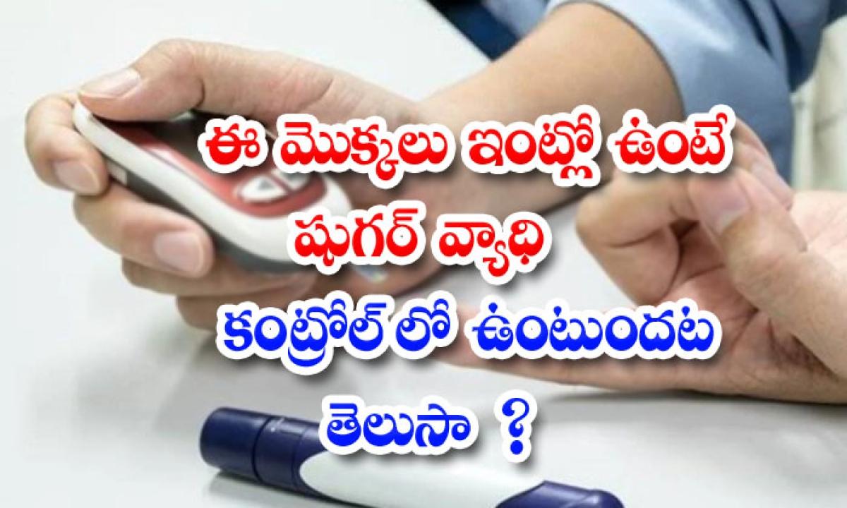 These Plants Can Control Blood Sugar Levels Naturally-ఈ మొక్కలు ఇంట్లో ఉంటే షుగర్ వ్యాధి కంట్రోల్లో ఉంటుందట..తెలుసా-Latest News - Telugu-Telugu Tollywood Photo Image-TeluguStop.com