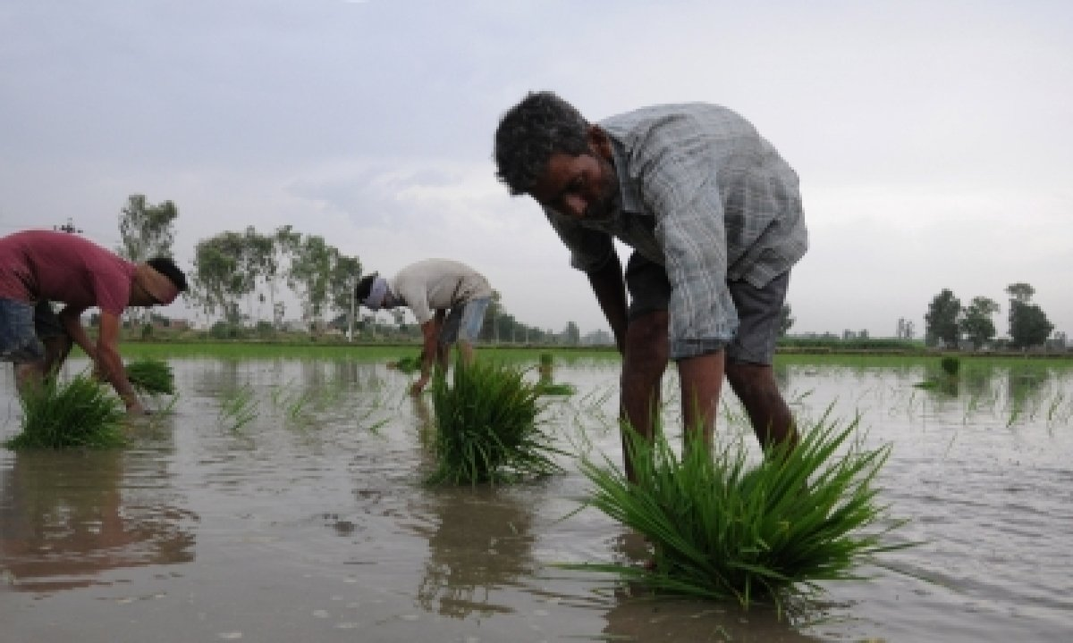 Centre, States Must Focus On Containing Covid In Rural Sector Ahead Of Kharif Sowing Season-TeluguStop.com