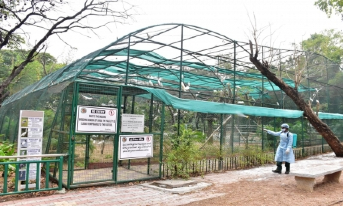 Covid Symptoms In Eight Lions At Hyderabad Zoo-TeluguStop.com