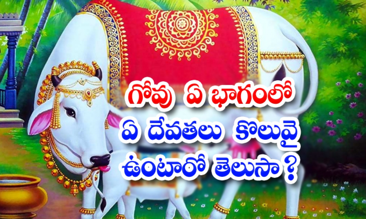 Interesting Facts About Gomatha Puja-TeluguStop.com