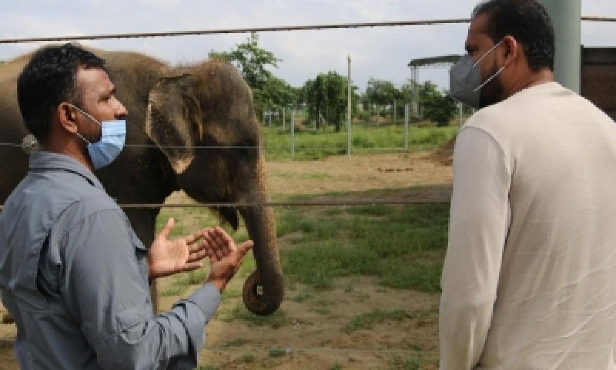 Cricketer Yusuf Pathan Bats For Elephants-TeluguStop.com