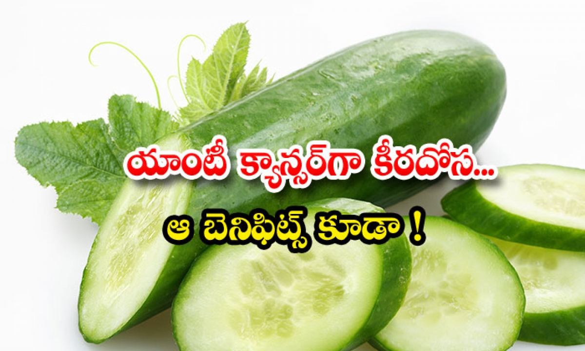 Cucumber Helps To Recover From Cancer-యాంటీ క్యాన్సర్గా `కీరదోస`.. ఆ బెనిఫిట్స్ కూడా-Latest News - Telugu-Telugu Tollywood Photo Image-TeluguStop.com