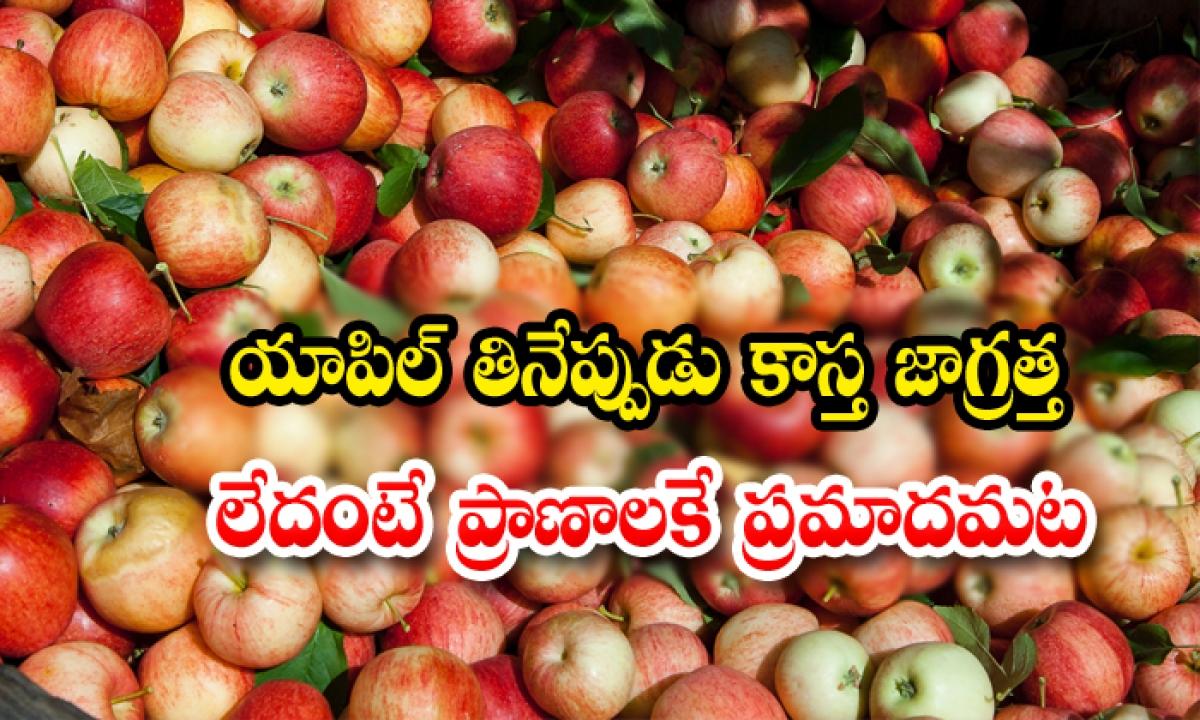 Do You Know Apple Seeds Are For Health-TeluguStop.com