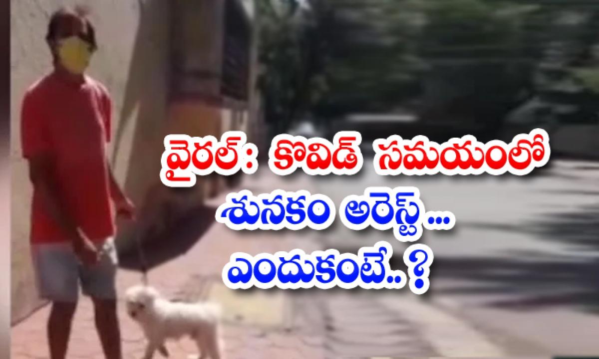 Viral Dog Arrested During Kovid Because-వైరల్ : కొవిడ్ సమయంలో శునకం అరెస్ట్.. ఎందుకంటే..-General-Telugu-Telugu Tollywood Photo Image-TeluguStop.com