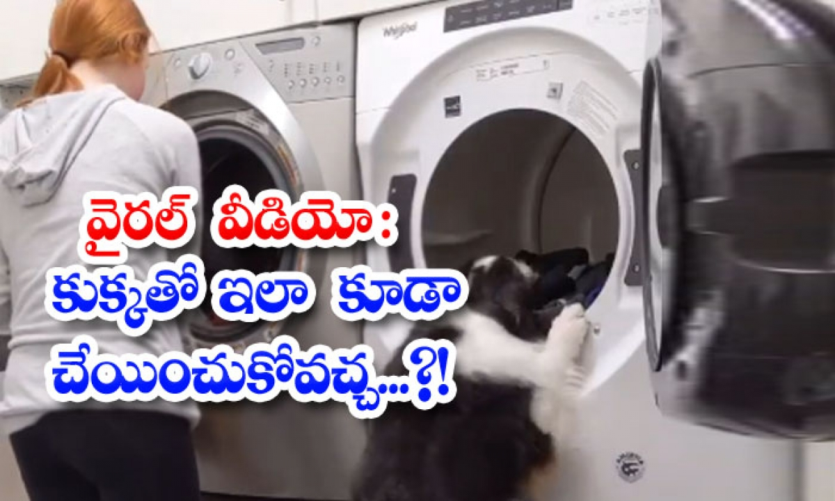 Viral Video Can This Be Done With A Dog-వైరల్ వీడియో: కుక్కతో ఇలా కూడా చేయించుకోవచ్చ..-General-Telugu-Telugu Tollywood Photo Image-TeluguStop.com