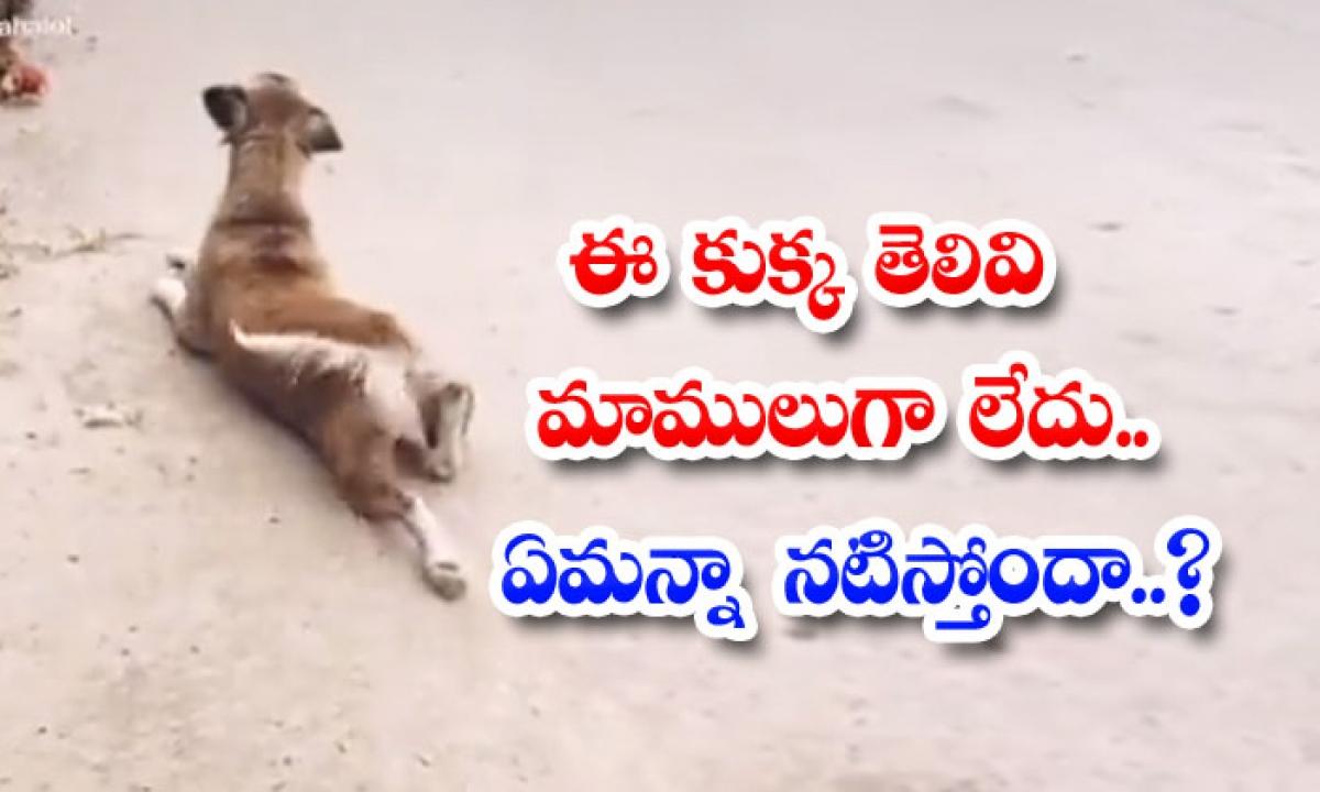 This Dogs Intellect Is Not Normal Is He Looking At Anything-ఈ కుక్క తెలివి మామూలుగా లేదు.. ఏమన్నా నటిస్తోందా..-General-Telugu-Telugu Tollywood Photo Image-TeluguStop.com