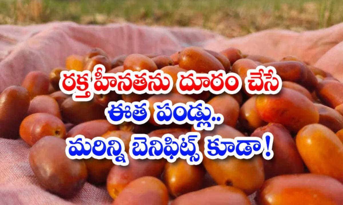 Eetha Pandlu Helps To Reduce Anemia-రక్త హీనతను దూరం చేస్తే ఈత పండ్లు..మరిన్ని బెనిఫిట్స్ కూడా-Latest News - Telugu-Telugu Tollywood Photo Image-TeluguStop.com