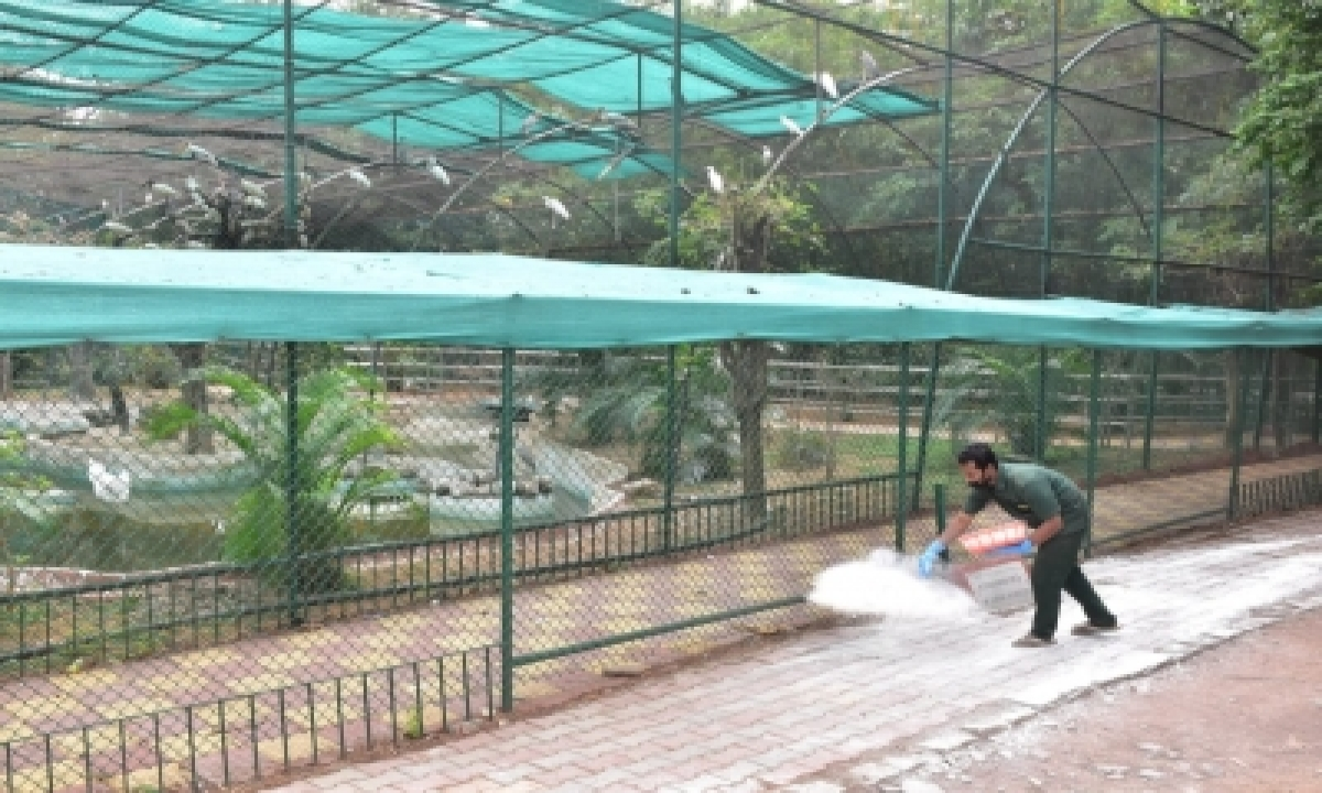 Eight Asiatic Lions At Hyderabad Zoo Test Positive For Covid (lead)-TeluguStop.com