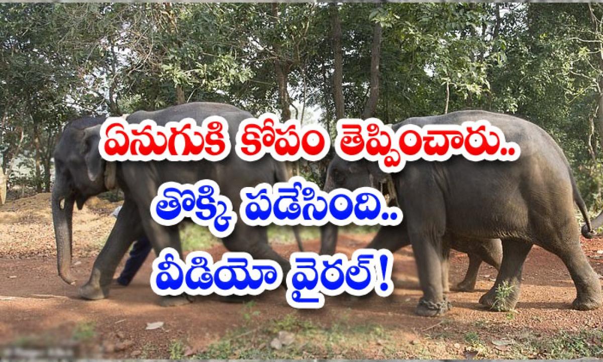 The Mob Clashes With The Herd Of Elephants-ఏనుగుకి కోపం తెప్పించారు.. తొక్కి పడేసింది..వీడియో వైరల్ -General-Telugu-Telugu Tollywood Photo Image-TeluguStop.com