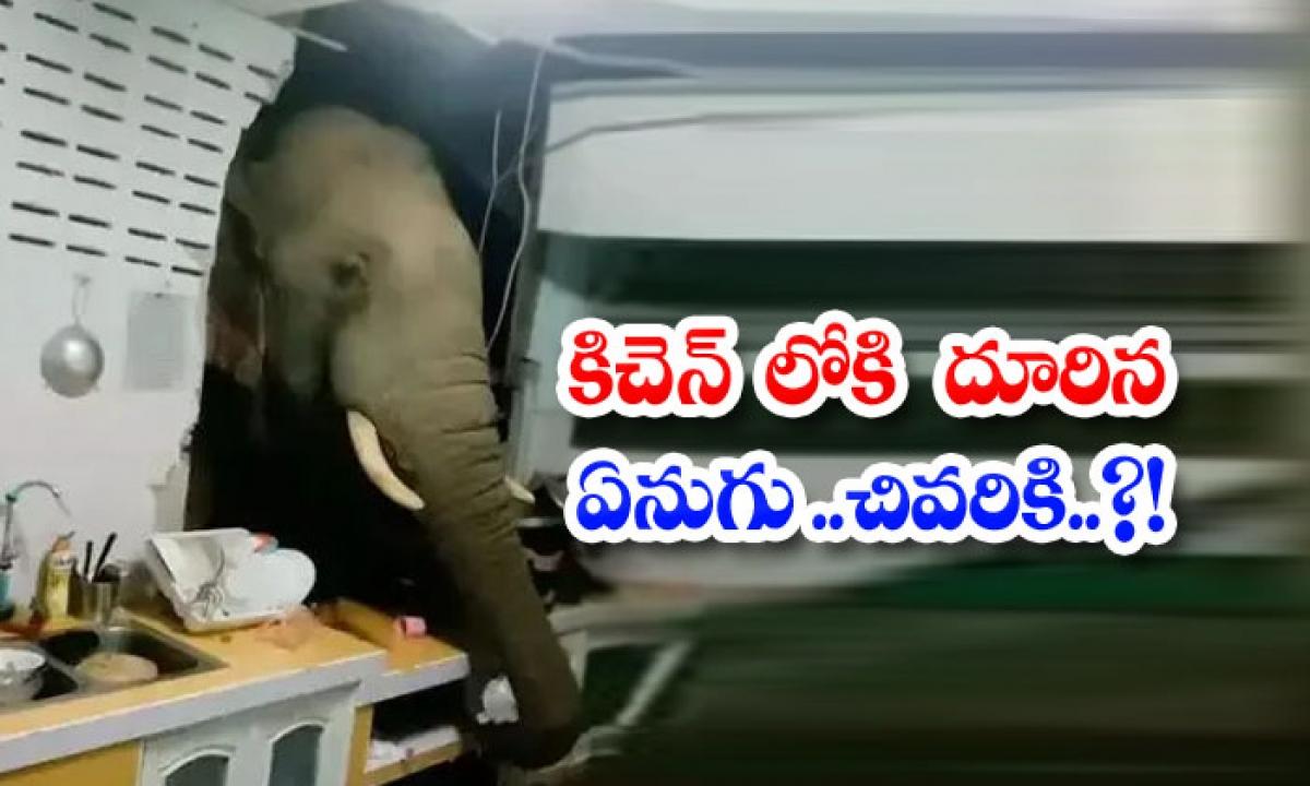 Viral Elephant Snuck Into The Kitchen Finally-వైరల్: కిచెన్ లోకి దూరిన ఏనుగు.. చివరకి..-General-Telugu-Telugu Tollywood Photo Image-TeluguStop.com