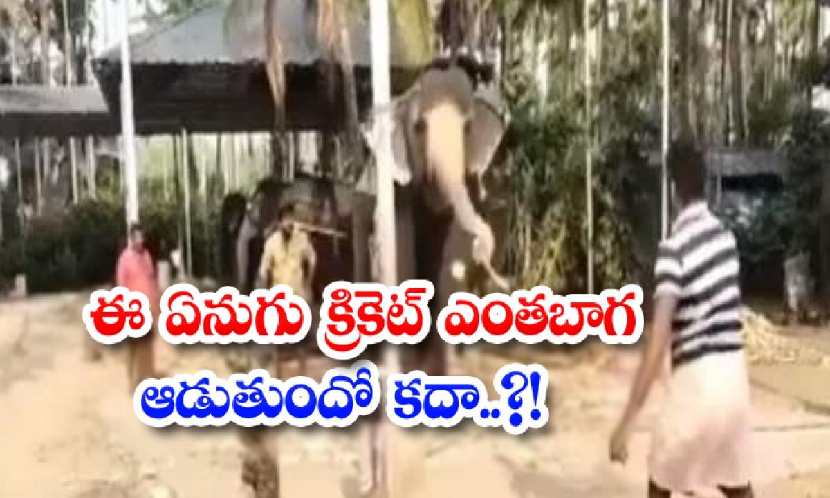Viral Video How Well Does This Elephant Play Cricket-వైరల్ వీడియో: ఈ ఏనుగు క్రికెట్ ఎంతబాగ ఆడుతుందో కదా..-General-Telugu-Telugu Tollywood Photo Image-TeluguStop.com