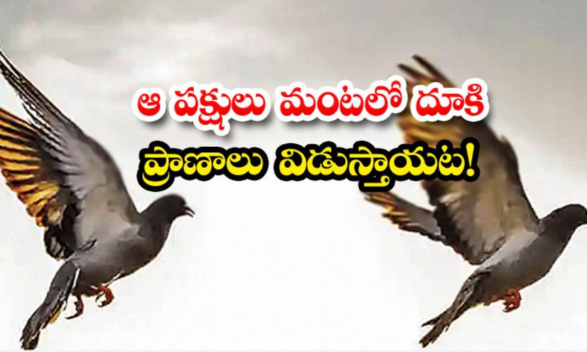 Harakiri Birds End Their Life Assam Jatinga Village-ఆ పక్షులు మంటలోకి దూకి ప్రాణాలు విడుస్తాయట-General-Telugu-Telugu Tollywood Photo Image-TeluguStop.com