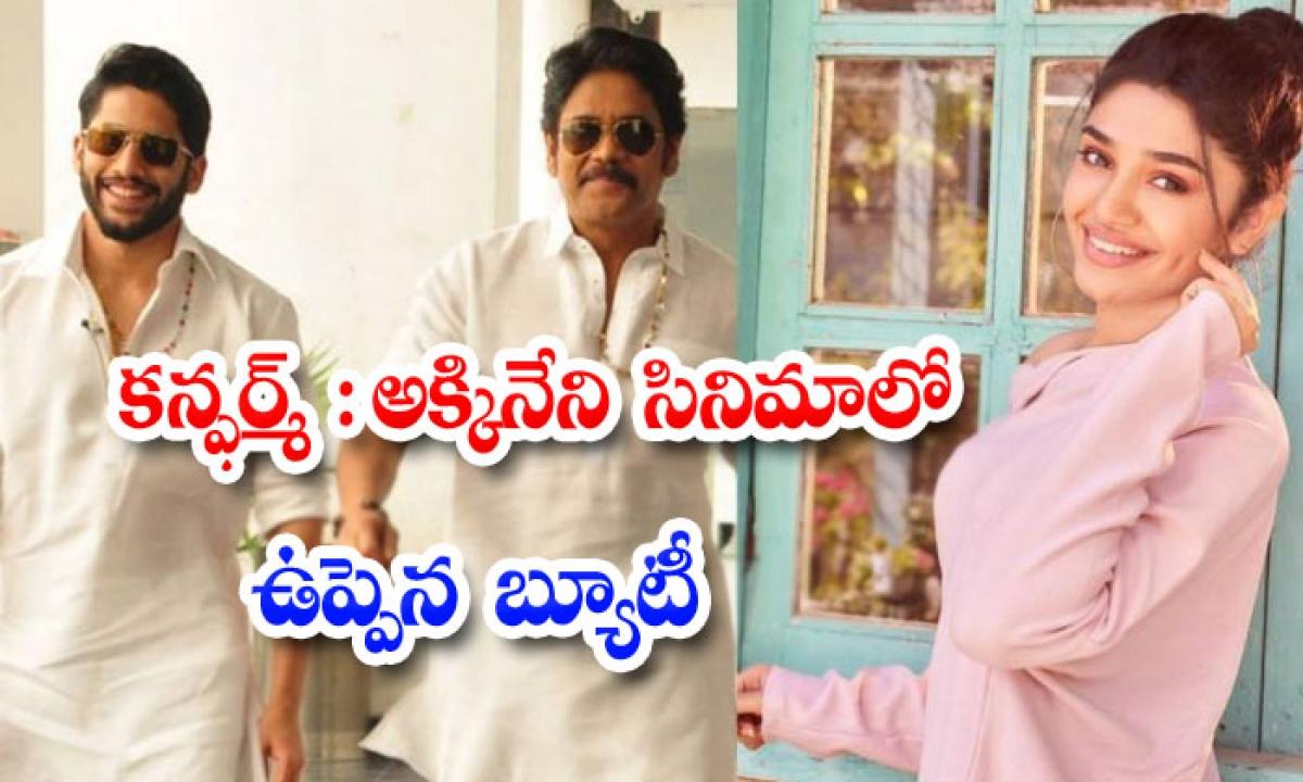 Uppena Heroine Krithi Shetty New Movie Bangarraju-కన్ఫర్మ్ : అక్కినేని సినిమాలో ఉప్పెన బ్యూటీ-Latest News - Telugu-Telugu Tollywood Photo Image-TeluguStop.com