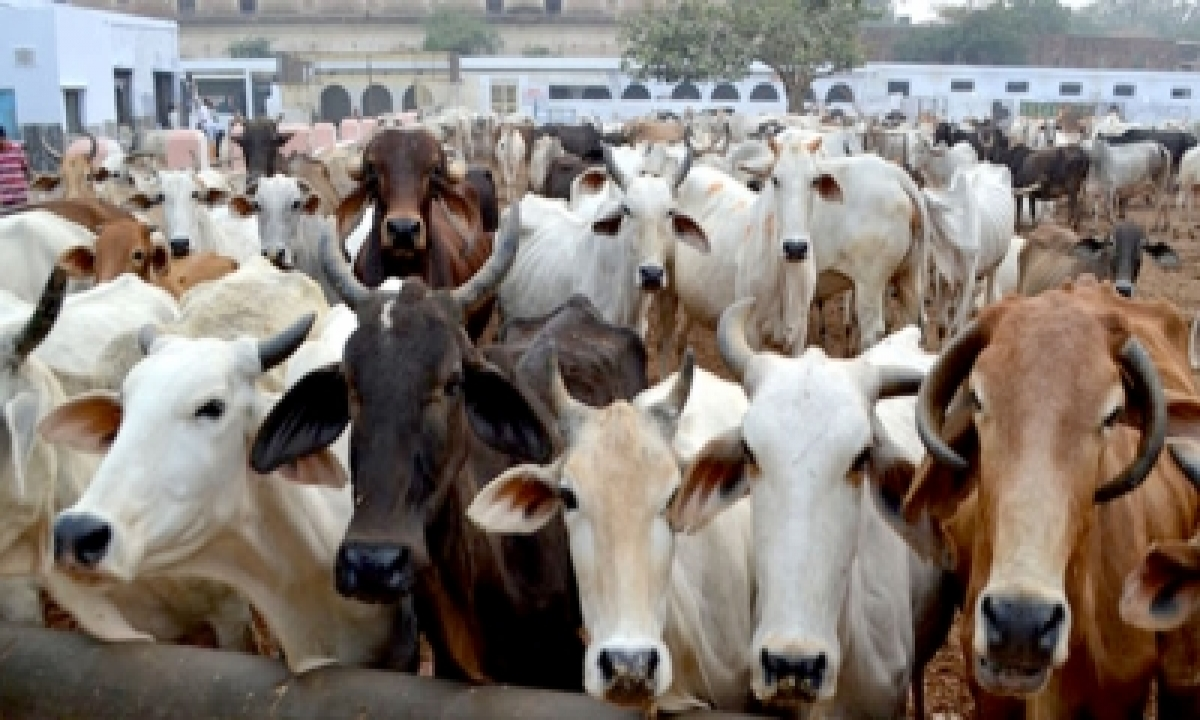 TeluguStop.com - First Case Under Anti-cow Slaughter Act Registered: K'taka Minister
