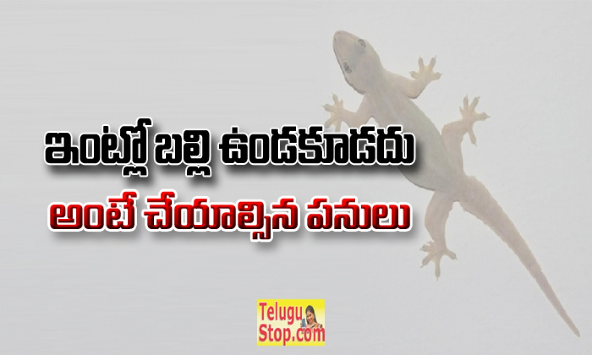 How To Get Rid Of Lizards At Home Useful Tips-ఇంట్లో బల్లి ఉండకూడదు అంటే చేయాల్సిన 8 పనులు-Telugu Health - తెలుగు హెల్త్ టిప్స్ ,చిట్కాలు-Telugu Tollywood Photo Image-TeluguStop.com