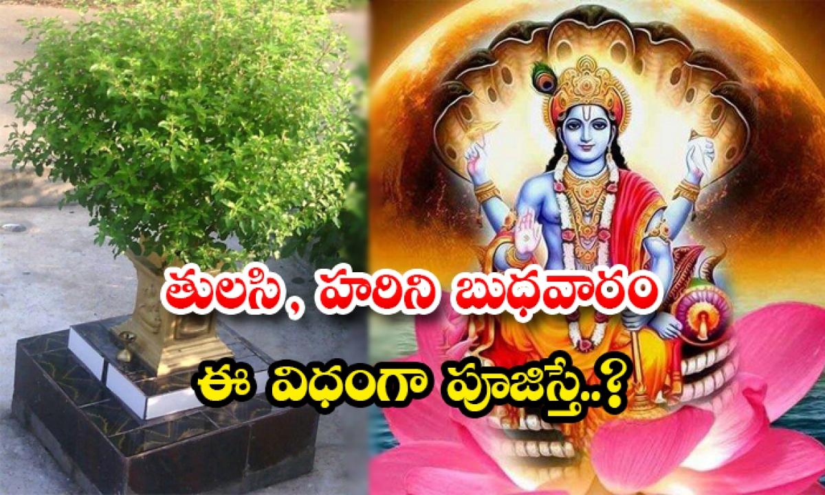 If Tulasi And Hari Are Worshiped Like This On Wednesday-TeluguStop.com