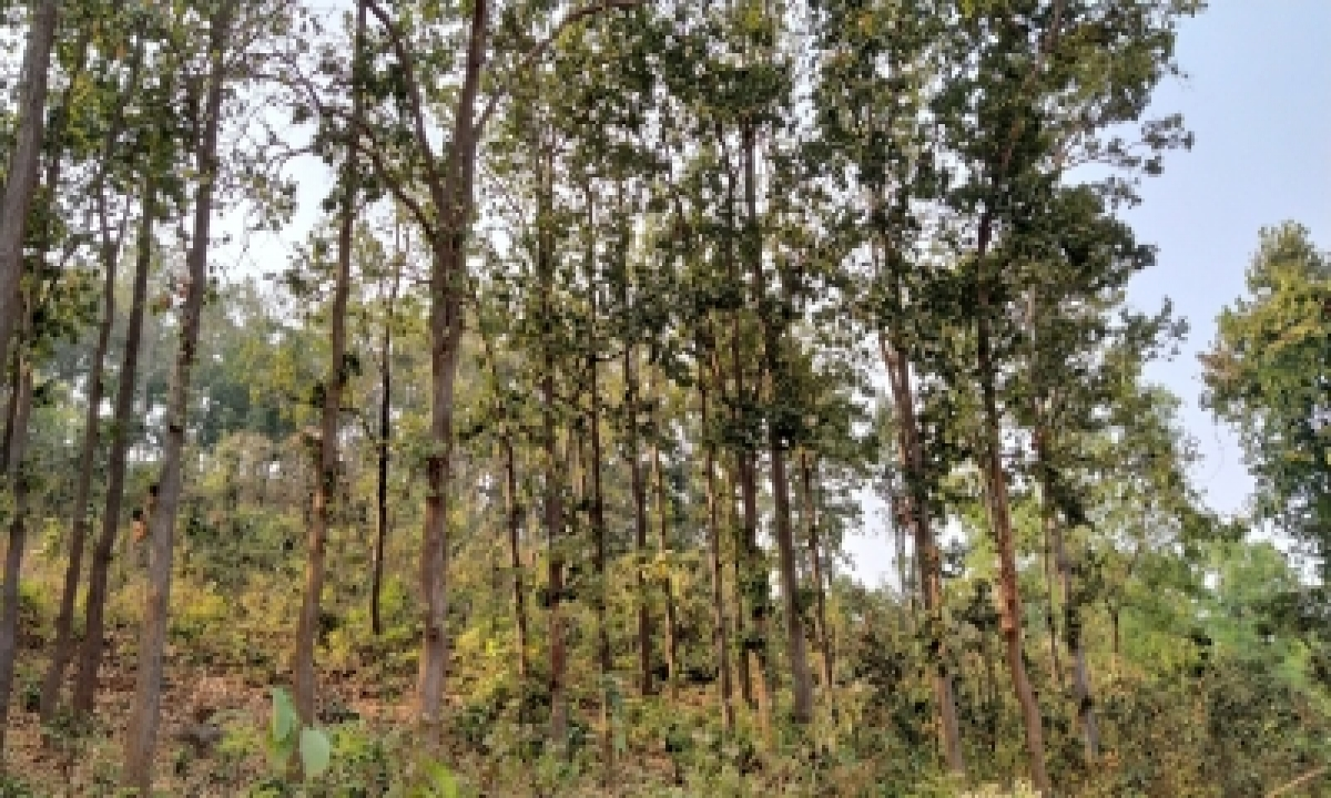 Haryana To Conduct Mushroom Survey In Kalesar Sanctuary-TeluguStop.com