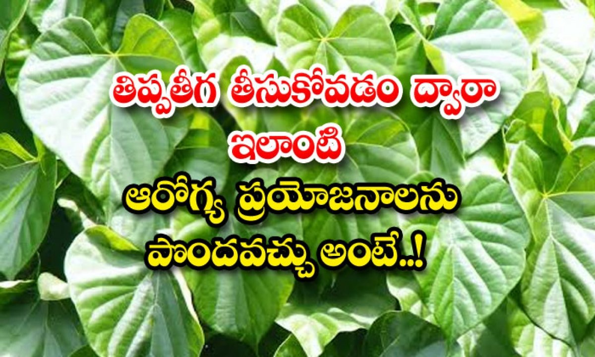 This Means That You Can Get Similar Health Benefits By Taking Thippathiga-తిప్పతీగ తీసుకోవడం ద్వారా ఇలాంటి ఆరోగ్య ప్రయోజనాలను పొందవచ్చు అంటే..-General-Telugu-Telugu Tollywood Photo Image-TeluguStop.com