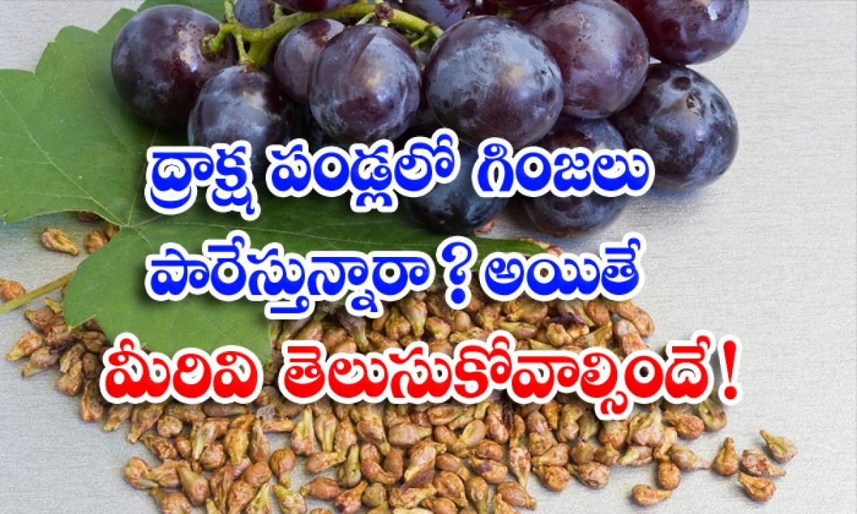 Health Benefits Of Grape Seeds-ద్రాక్ష పండ్లలో గింజలు పారేస్తున్నారా అయితే మీరివి తెలుసుకోవాల్సిందే-Latest News - Telugu-Telugu Tollywood Photo Image-TeluguStop.com