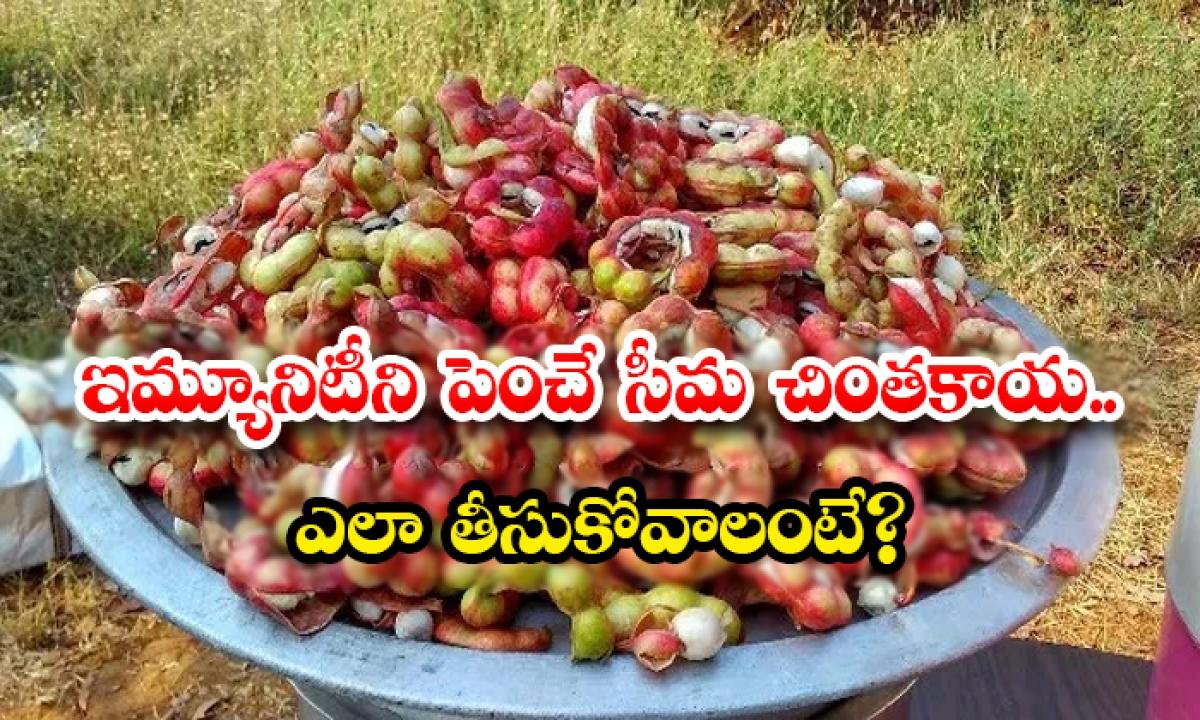 Health Benefits Of Seema Chintakaya-ఇమ్యూనిటీని పెంచే సీమ చింతకాయ..ఎలా తీసుకోవాలంటే-Latest News - Telugu-Telugu Tollywood Photo Image-TeluguStop.com
