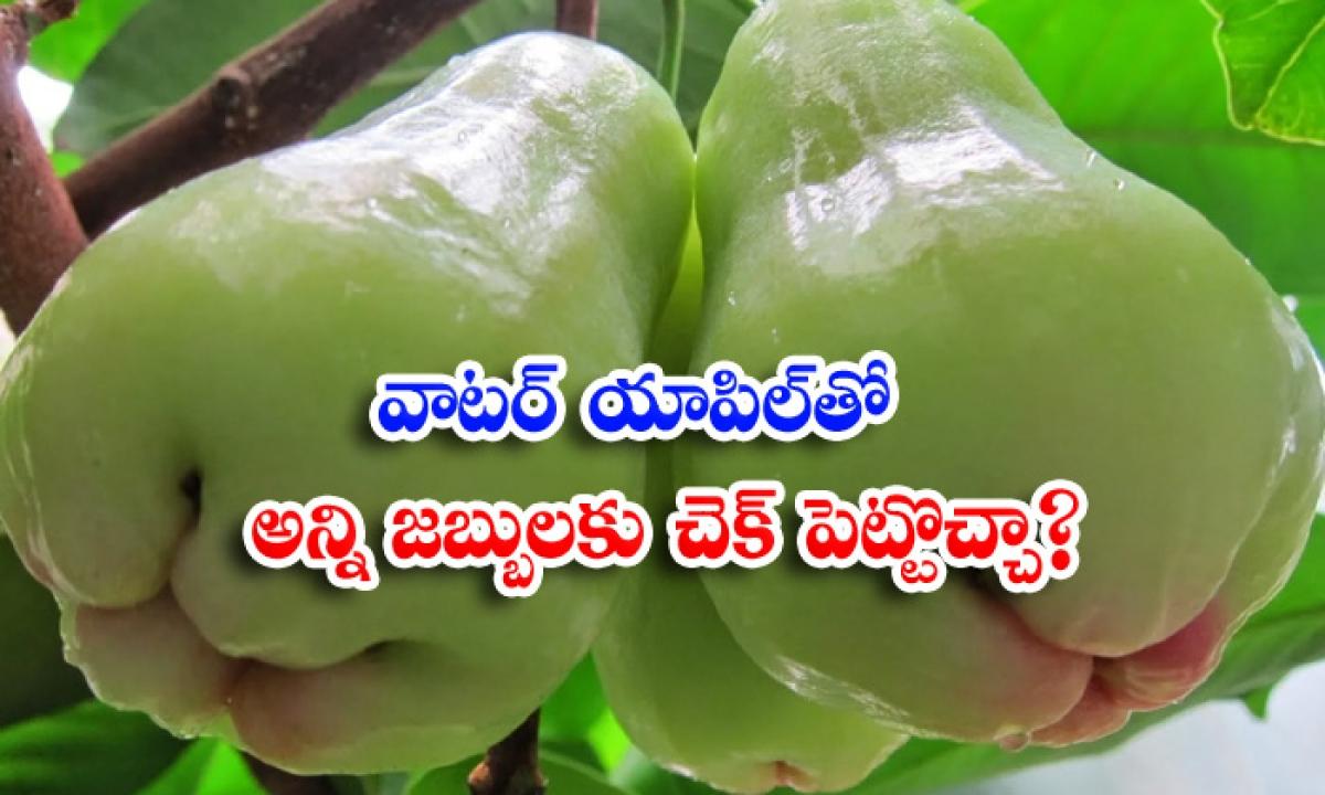 Health Benefits Of Water Apple Benefits Of Water Apple-TeluguStop.com