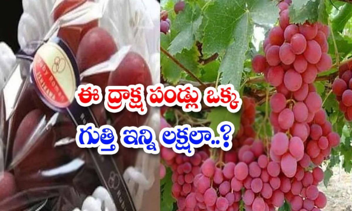 How Many Lakhs Of A Bunch Of These Grapes-ఈ ద్రాక్ష పండ్లు ఒక్క గుత్తి ఇన్ని లక్షలా..-General-Telugu-Telugu Tollywood Photo Image-TeluguStop.com