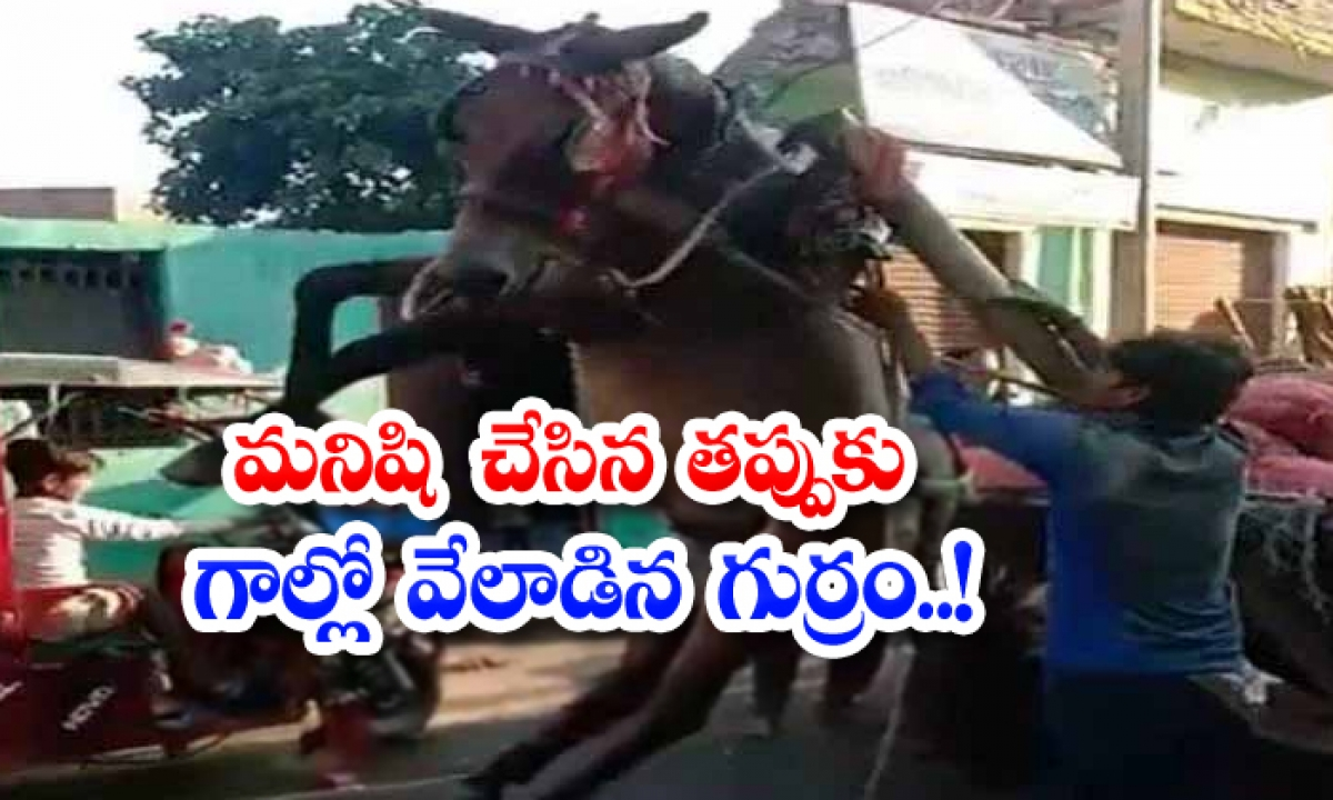 Viral Video A Horse Hanging In The Gall For A Mistake Made By A Man-వైరల్ వీడియో: మనిషి చేసిన తప్పుకు గాల్లో వేలాడిన గుర్రం..-General-Telugu-Telugu Tollywood Photo Image-TeluguStop.com