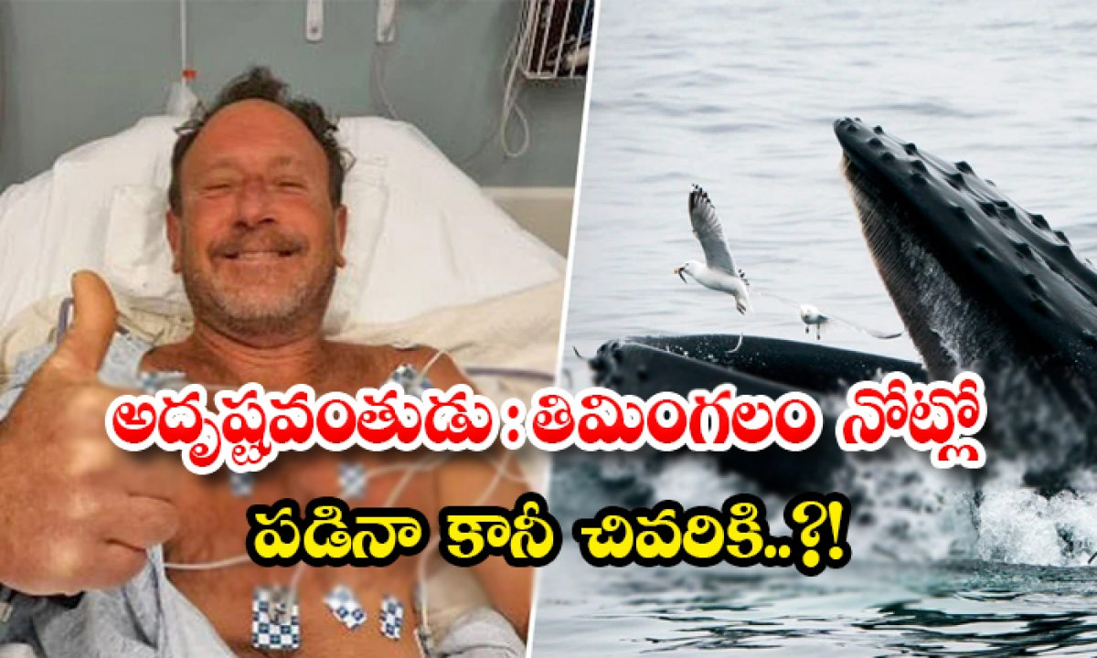 Humpback Whale Swallows And Splits Lobster Diver Michael-అదృష్టవంతుడు: తిమింగలం నోట్లో పడినా కానీ చివరికి..-General-Telugu-Telugu Tollywood Photo Image-TeluguStop.com
