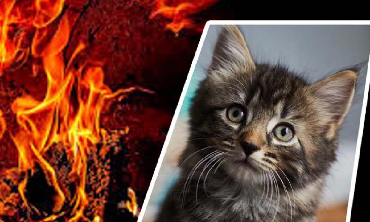Hyderabad Man Kitten Viral Video-పిల్లిని సజీవ దహనం చేసిన కిరాతకుడు-Breaking/Featured News Slide-Telugu Tollywood Photo Image-TeluguStop.com