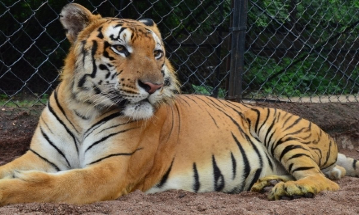 Hyderabad Zoo Mourns Loss Of Elephant (83), Leopard (21)-TeluguStop.com