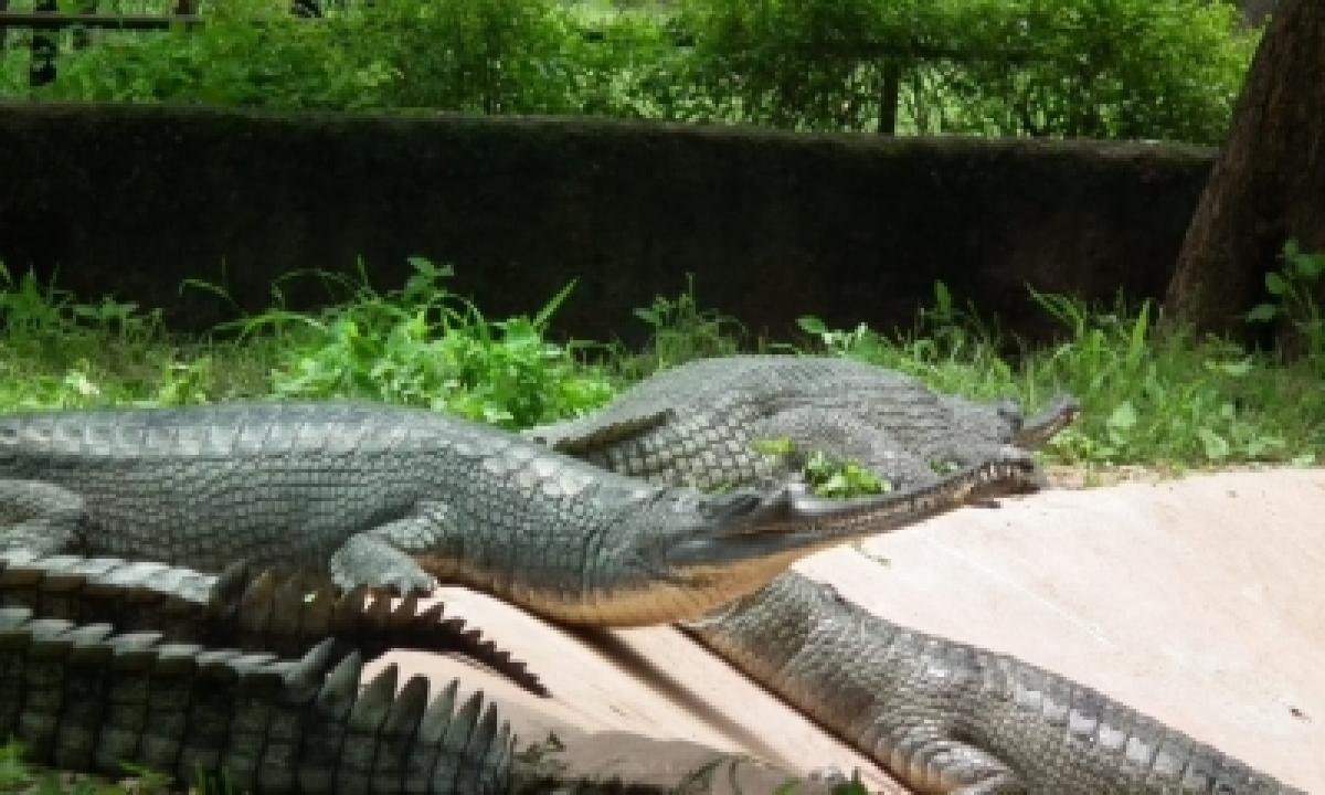 Hyderabad Zoo Successfully Breeding Endangered Species-Environment/Wildlife News-Telugu Tollywood Photo Image-TeluguStop.com