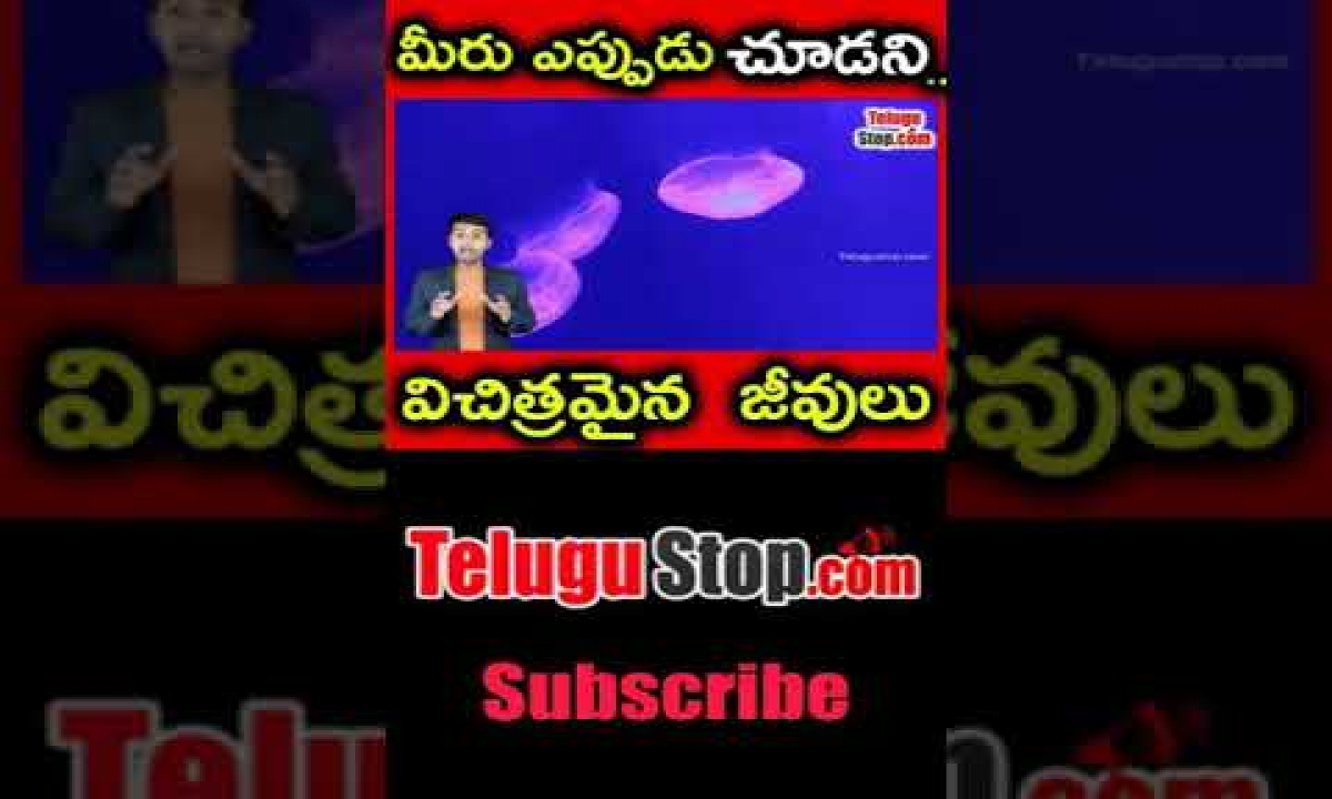 Strange Transparent Animals In The World In Telugu |telugu Facts |-TeluguStop.com