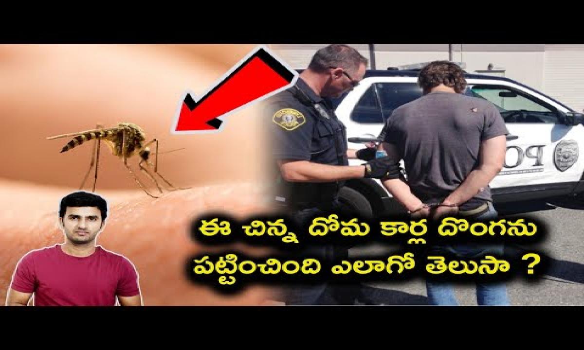 Mosquito Helps Police In Stolen Car Investigation In Telugu | Telugu Facts |-TeluguStop.com