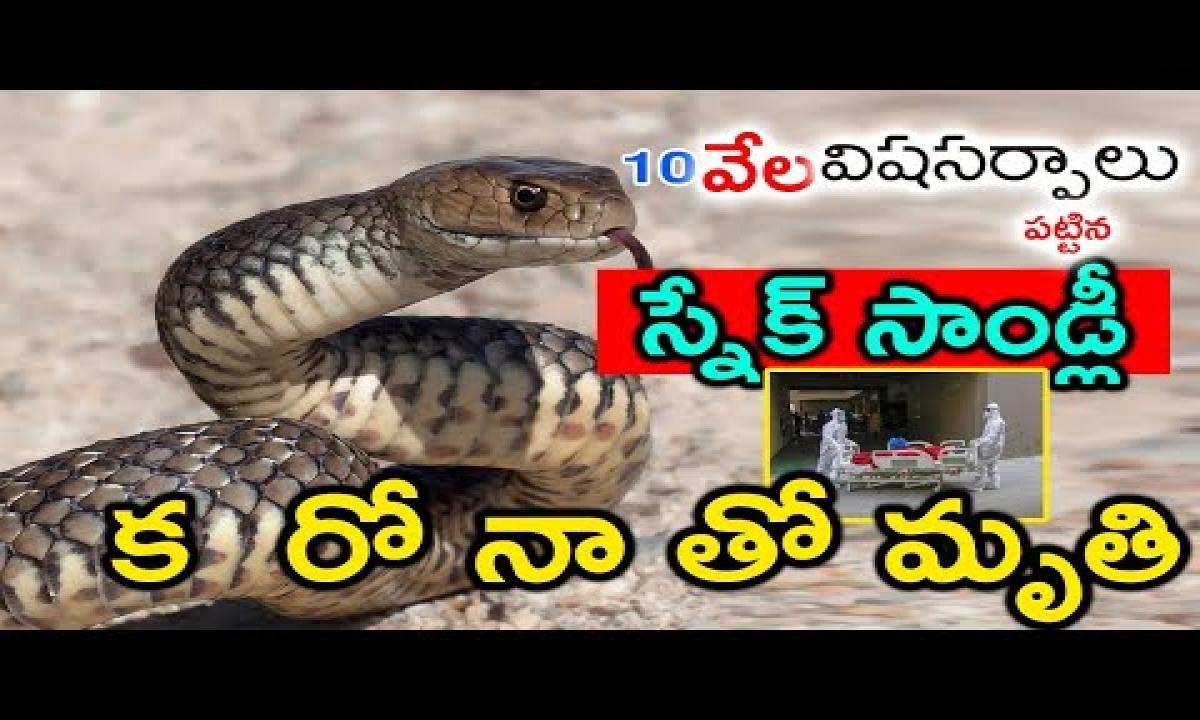 Snake Stanley Died With Corona 10 Telugu Ful-Snake Stanley Died With Corona 10 వేల విషసర్పాలు పట్టిన స్నేక్ సాండ్లీ క రో నా తో మృతి-Telugu Trending Viral Videos-Telugu Tollywood Photo Image-TeluguStop.com