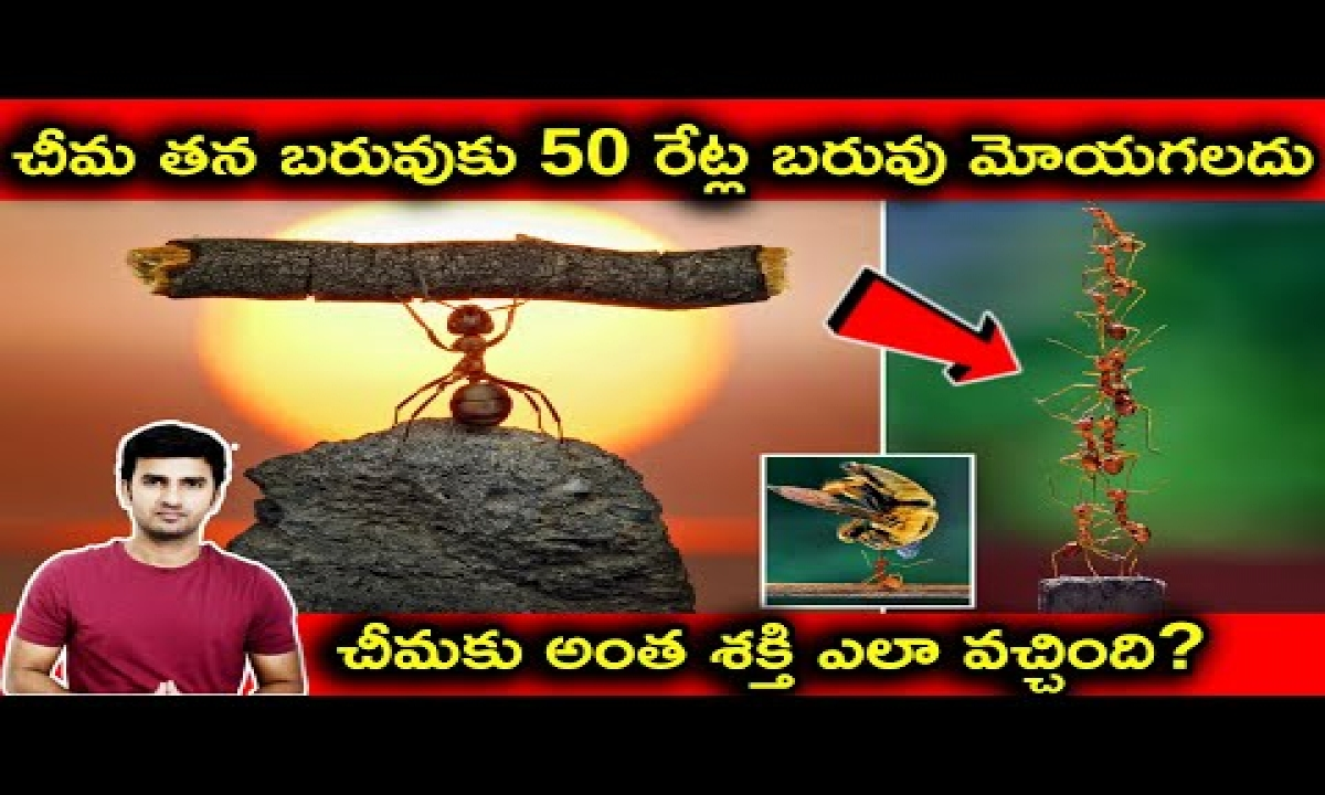 How Ant Can Lift 50 Time More Weight |telugu Facts|-TeluguStop.com