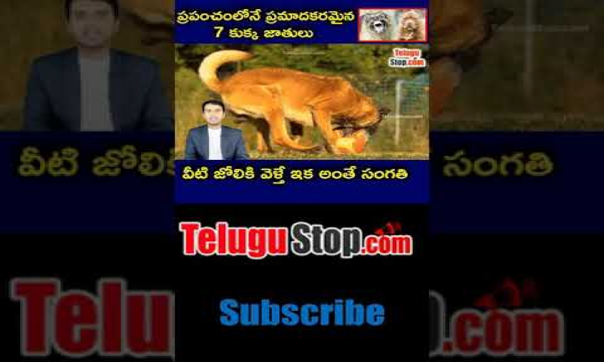 Top 7 Dangerous Dog Breeds In The World  telugu Facts -TeluguStop.com