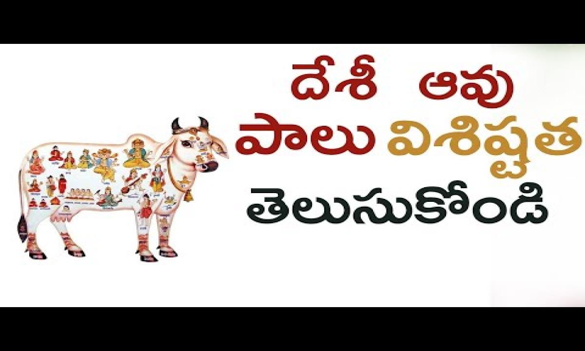 Benefits Of Desi Cow Milk   Desi Cow Ghee Benefits   Desi దేశీ ఆవు పాలు విశిష్టత తెలుసుకోండి-Benefits Of Desi Cow Milk Desi Cow Ghee Benefits Desi దేశీ ఆవు పాలు విశిష్టత తెలుసుకోండి-Telugu Trending Viral Videos-Telugu Tollywood Photo Image-TeluguStop.com