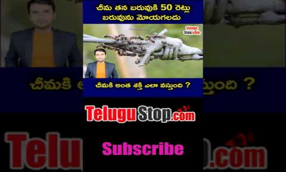 How Ant Can Lift 50 Time More Weight Telugu Facts-Telugu Trending Viral Videos-Telugu Tollywood Photo Image-TeluguStop.com